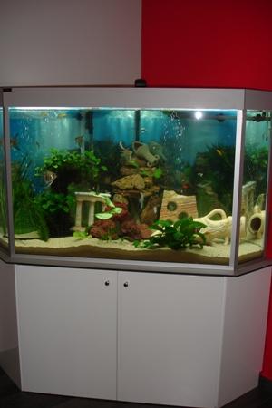 meuble aquarium d angle blanc laqu sadeco le sp cialiste en cuisines et salles de bain. Black Bedroom Furniture Sets. Home Design Ideas